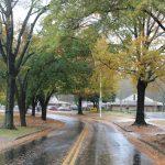 Falling Leaves In Charlotte, North Carolina