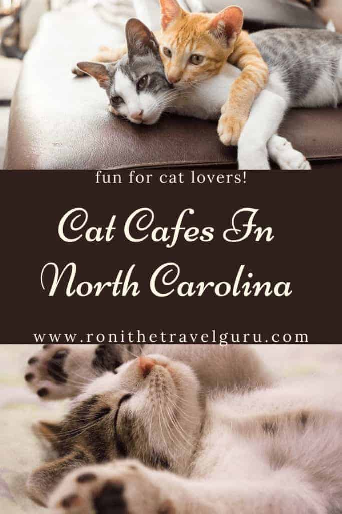 cat cafes near me